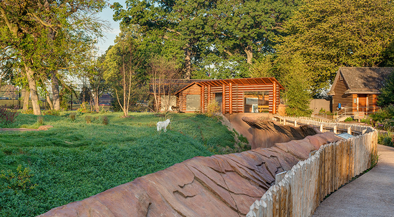 DZS Cotton Family Wolf Wilderness Exhibit